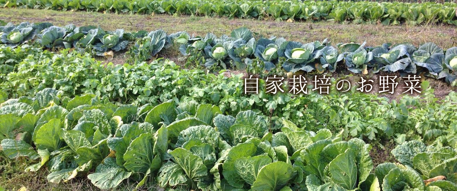 自家栽培のお野菜